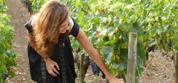 california vines
